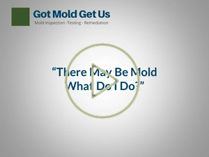 Mold Site Video Image